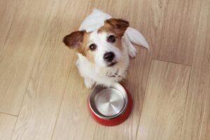 cane con ciotola vuota, che guarda in alto
