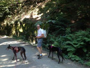 Giovane uomo con due levrieri neri, lungo un sentiero di montagna