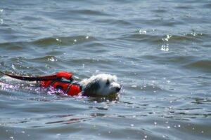 cane nuota nel mare con salvagente